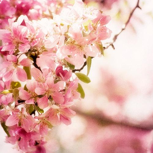 Etsy Blossom